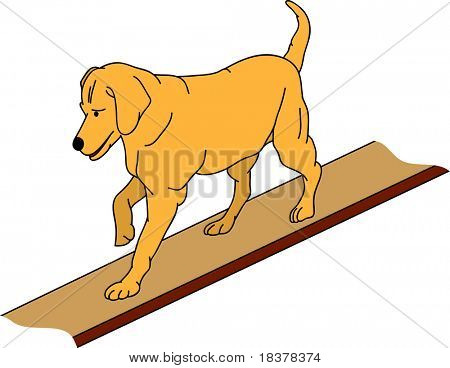vector - dog agility , isolated on background poster