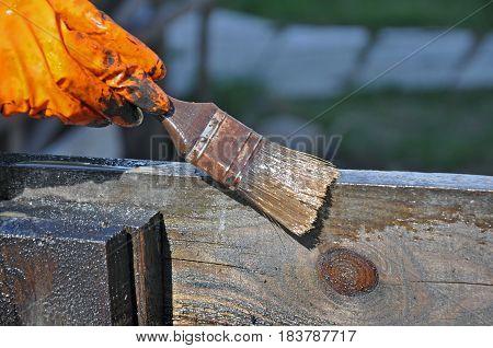 Hand in orange rubber glove with brush varnishes dark wooden surface.