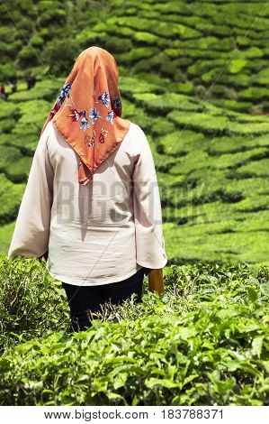 Veiled woman staring at tea plantations on highlands