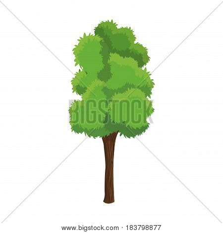 tree woody foliage nature over white background vector illustration