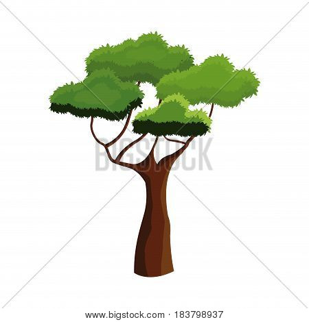 african tree foliage high ecosystem over white background vector illustration
