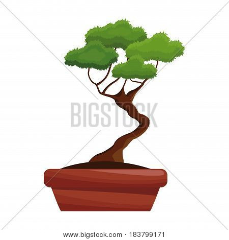 pot tree bonsay longevity botanical hobby vector illustration