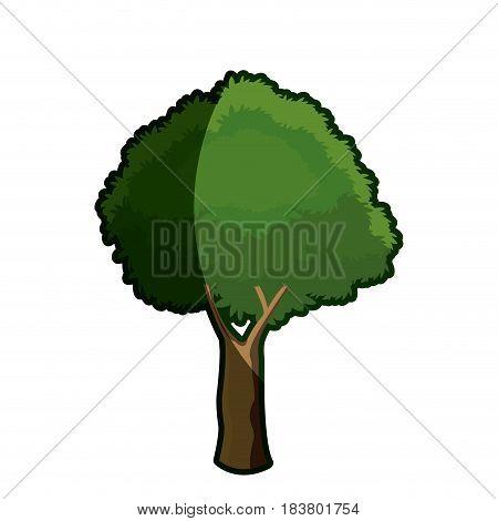 tree foliage botanical plant shadow vector illustration