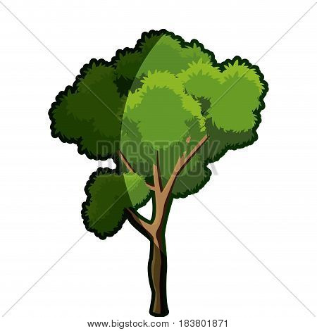 tree foliage branch wood trunk bark shadow vector illustration