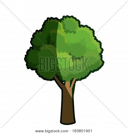 tree oak natural forest foliage shadow vector illustration