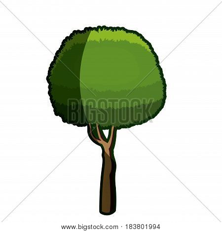 tree foliage round natural plant shadow vector illustration