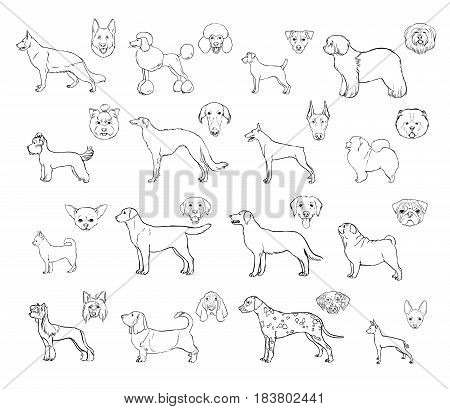 Dog breeds, side view and muzzle set. Collection with hand drawn contour realistic illustration