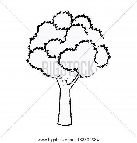 tree foliage wood branch botancial sketch vector illustration