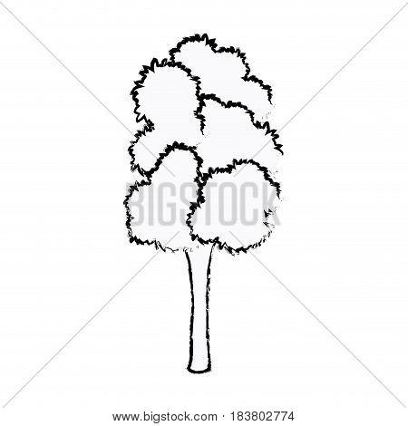 tree foliage trunk organic natural sketch vector illustration
