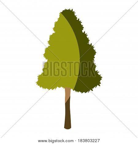 tree plant pine natural foliage image vector illustration