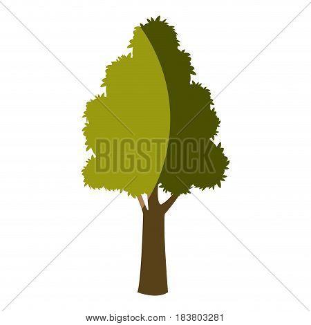 tree plant foliage natural bark design vector illustration