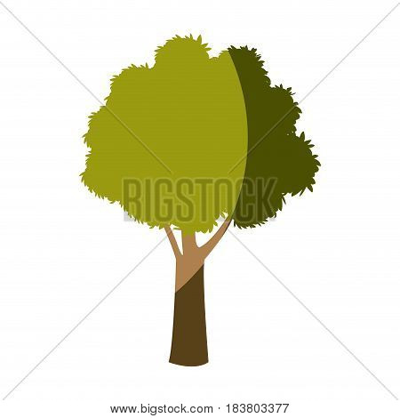 tree plant foliage botanic garden vector illustration