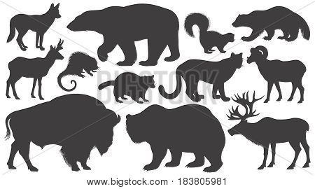 Black silhouettes animals of North America on white background set. Vector illustration art. Polar bear coyote puma skunk wolverine antelope raccoon porcupine reindeer ram bison grizzly.