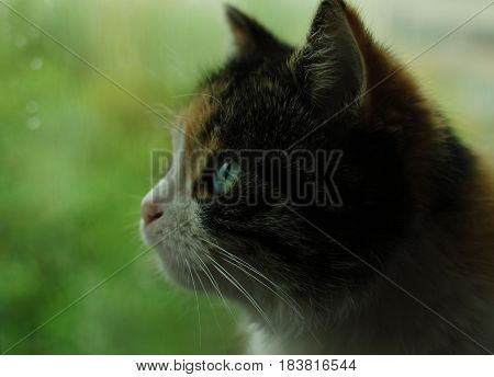 Beautiful, colorful, furry kitty. Researcher of the surroundings. An inquisitive animal.