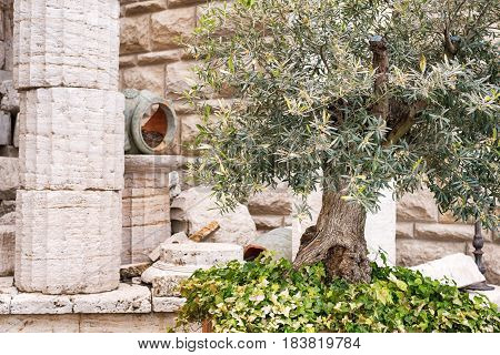 Classical old greek columns and wall background with stone floor in the garden.