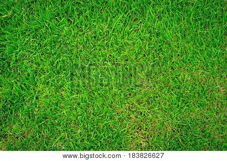 The lawn floor is well maintained and maintained, green lawn for the background.
