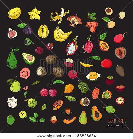 exotic tropical fruits hand drawn set. Collection of whole fruit and cutaway. Avocado, Ackee, Banana, Guava, Dogwood, Durian, Figs, Carambola, Kiwano Coconut Lychee Longan Mango Mangosteen