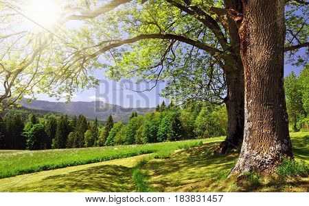 sun raise wallpaper with tree in morning