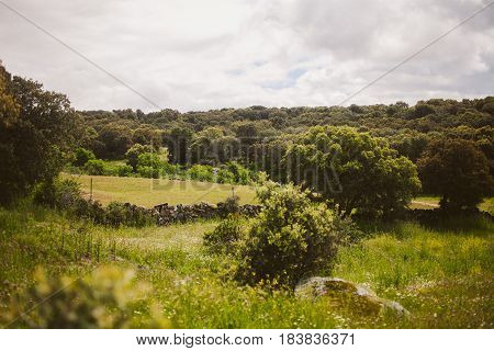 Spring background. Spring landscape in Extremadura.  Meadows in spring. Colorful spring landscape. Flowers and tress in the countryside.