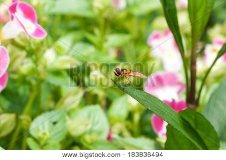 One small yellow black fly with red eyes insect sitting on green leave surrounded by pink white flowers.