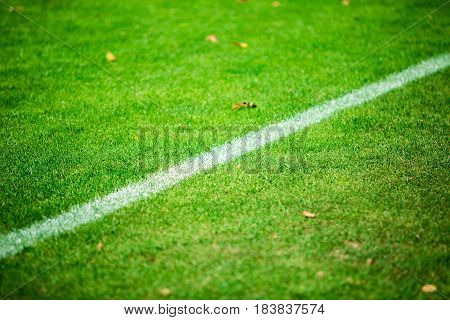 Grass And Chalk Line On Football Pitch Close-up