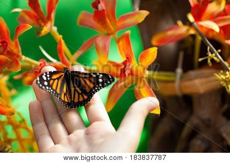 Butterfly Resting On Human Hand Next To Flowers