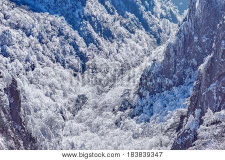 Sunrise above the frozen forest in Huangshan National park. China.