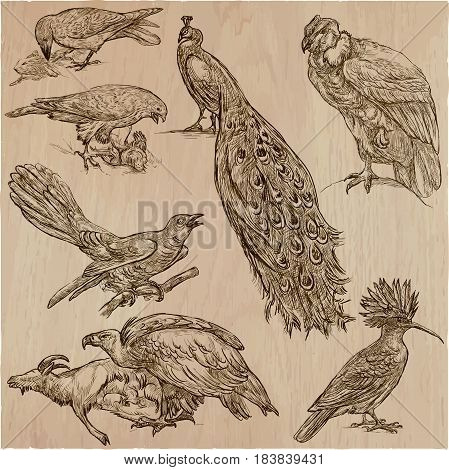 BIRDS. Animals around the World. Collection of an hand drawn vector illustrations. Freehand sketches. Line art. Each drawing comprise of a few layers of outlines. Colored background is isolated. Easy editable.