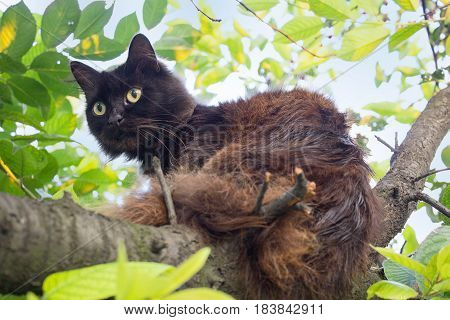 Black fluffy cat is sitting on a tree. Pets