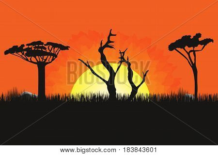 African Landscape With Trees And Sun. Sunset On Background. Savanna, Prairies For Wallpaper. Vector