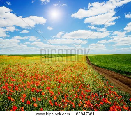 Awesome scene of the countryside with white fluffy clouds. Fantastic and gorgeous day. Location rural place of Ukraine, Europe. Wonderful springtime of wallpaper. Ecology concept. Beauty world.