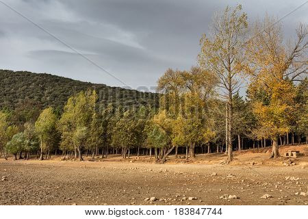 Trees in the forest in Middle Atlas Morocco