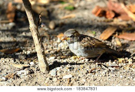 Bird Looking For Food