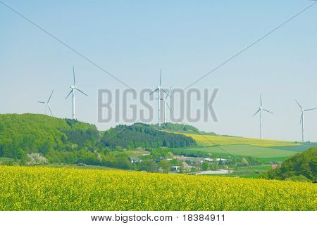 Blossoming Rapeseed And Windmills.
