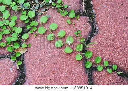 Weeds growing on brown brick pathway floor background