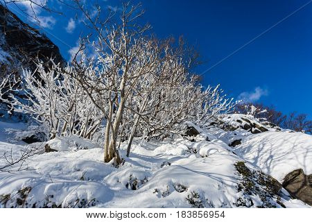 The snowy tree on the cliff in winter