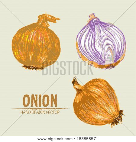 Digital vector color detailed onion hand drawn retro illustration collection set. Thin artistic linear pencil outline. Vintage ink flat style, engraved simple doodle sketches. Isolated objects