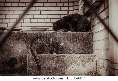 Two homeless cats, black and striped. Retro photo effect.