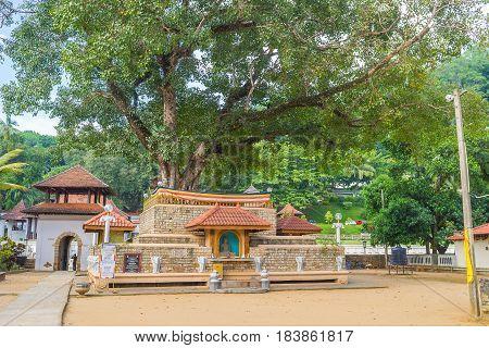 The Great Bodhi Tree