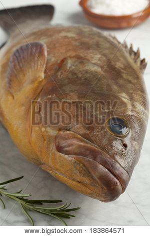 Single fresh raw dusky grouper close up