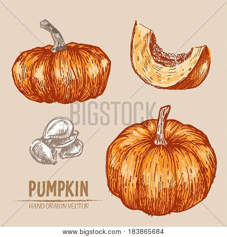 Digital vector color detailed pumpkin hand drawn retro illustration collection set. Thin artistic linear pencil outline. Vintage ink flat style, engraved simple doodle sketches. Isolated objects