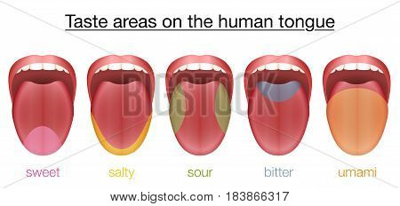 Taste areas of the human tongue - sweet, salty, sour, bitter and umami - with colored regions of the appropriate taste buds. Isolated vector illustration on white background.