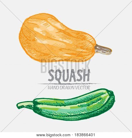 Digital vector color detailed squash hand drawn retro illustration collection set. Thin artistic linear pencil outline. Vintage ink flat style, engraved simple doodle sketches. Isolated objects
