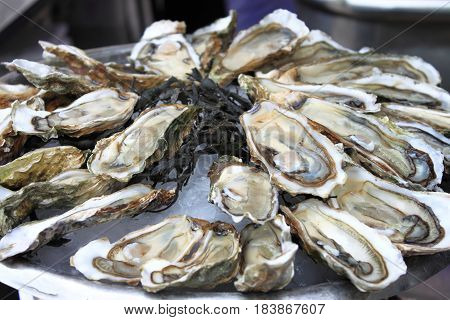 Bunch of Oysters for sale in a fish market