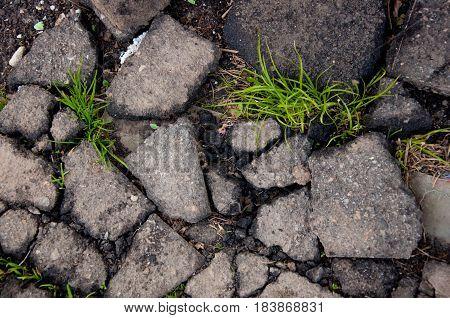 Cracked black asphalt texture background. Green grass leaves between bitumen pieces