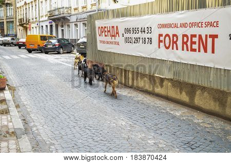 Lviv Ukraine - June 1 2013: For rent sign in downtown with stray dogs running on cobblestone street