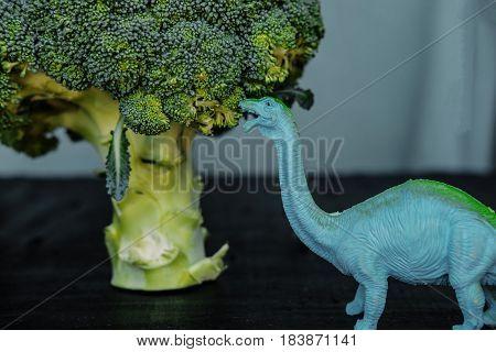 Broccoli And Toy Dinosaur On Black Board