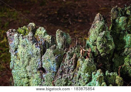 Decomposing Tree Trunk With Bark Covered By Green Moss