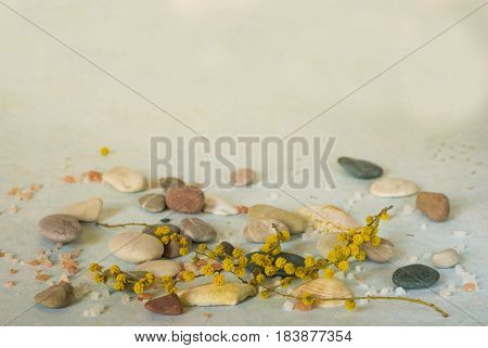 tender backgraund with flowers, sea stone and salt