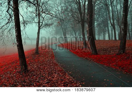 Autumn park view. Autumn landscape of foggy autumn park with red fallen autumn leaves.Autumn alley in the fog- gothic autumn landscape in cloudy weather with bare red autumn trees along autumn alley
